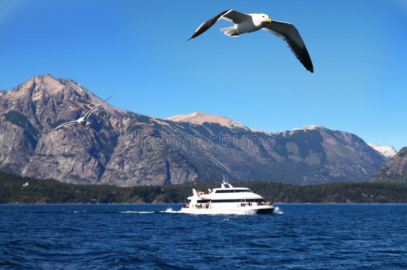 Download Cruise ship with seagulls stock photo. Image of landscape - 13011744