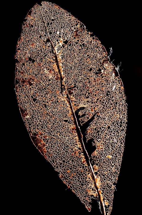 Crumbled Book leaf, black Background 2. Skeleton of a Crumbled Book leaf exempt in front of black background royalty free stock photo