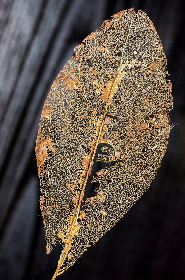 Crumbled Book leaf, black Background 3. Skeleton of a Crumbled Book leaf exempt in front of black background royalty free stock image