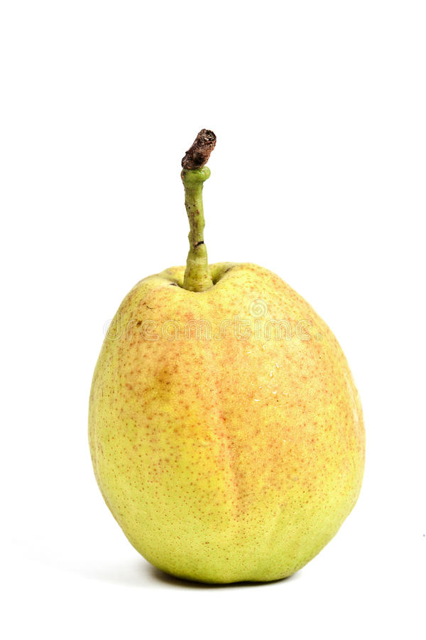 Download Crunchy Chinese Pear Over White Background Stock Photo - Image: 13145970