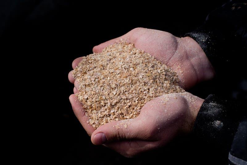 Crusca di frumento in mani agricole del ` s fotografie stock libere da diritti
