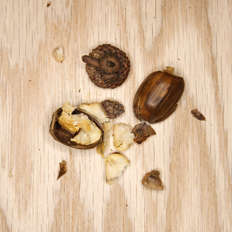 Download Crushed Acorn. Stock Photo - Image: 2047190