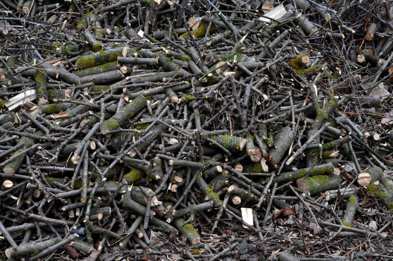 The crushed branches of trees and shrubs_6 stock photo
