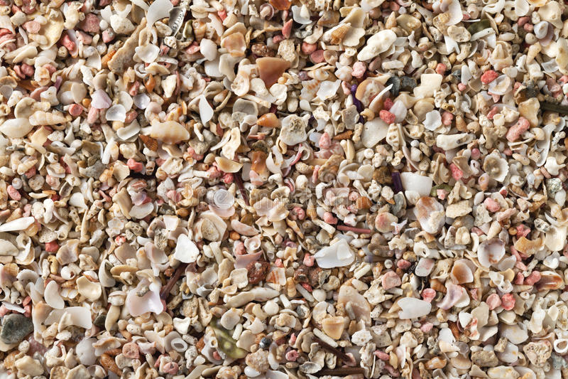 Crushed seashells. On summer beach as background royalty free stock images