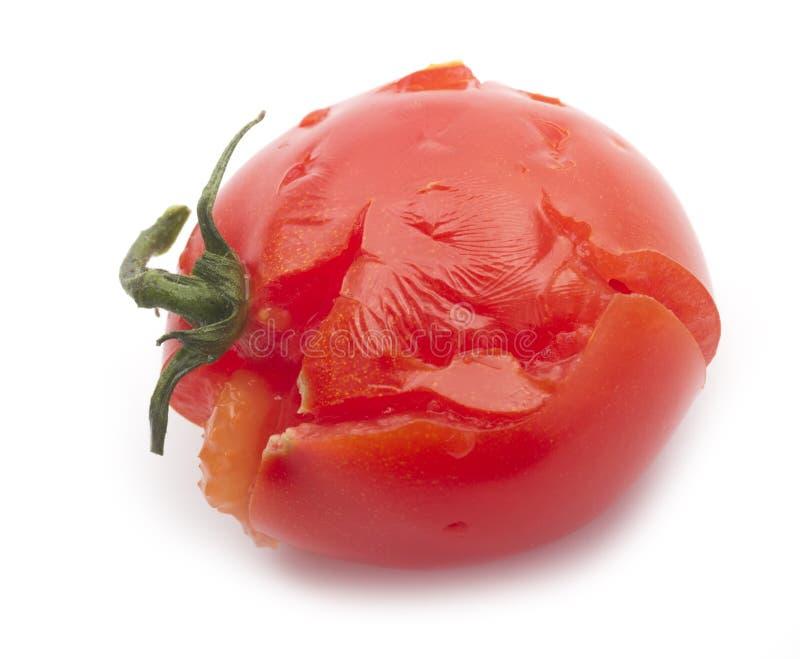 Crushed tomato. Single crushed tomato isolated on white background royalty free stock images