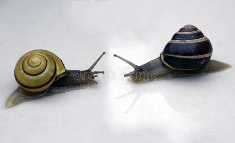 Crustáceos de los caracoles de la uva La casa está siempre con usted imagen de archivo