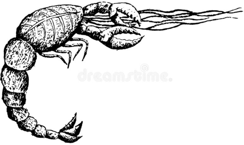 Crustace-005 Free Public Domain Cc0 Image