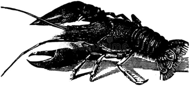 Crustace-007 Free Public Domain Cc0 Image