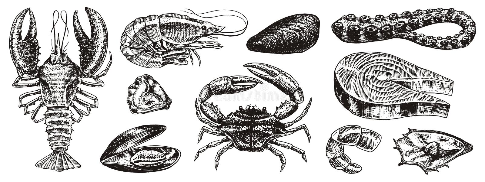 Crustaceans, shrimp, lobster or crayfish, crab with claws. River and lake or sea creatures. Freshwater aquarium. Poster royalty free illustration