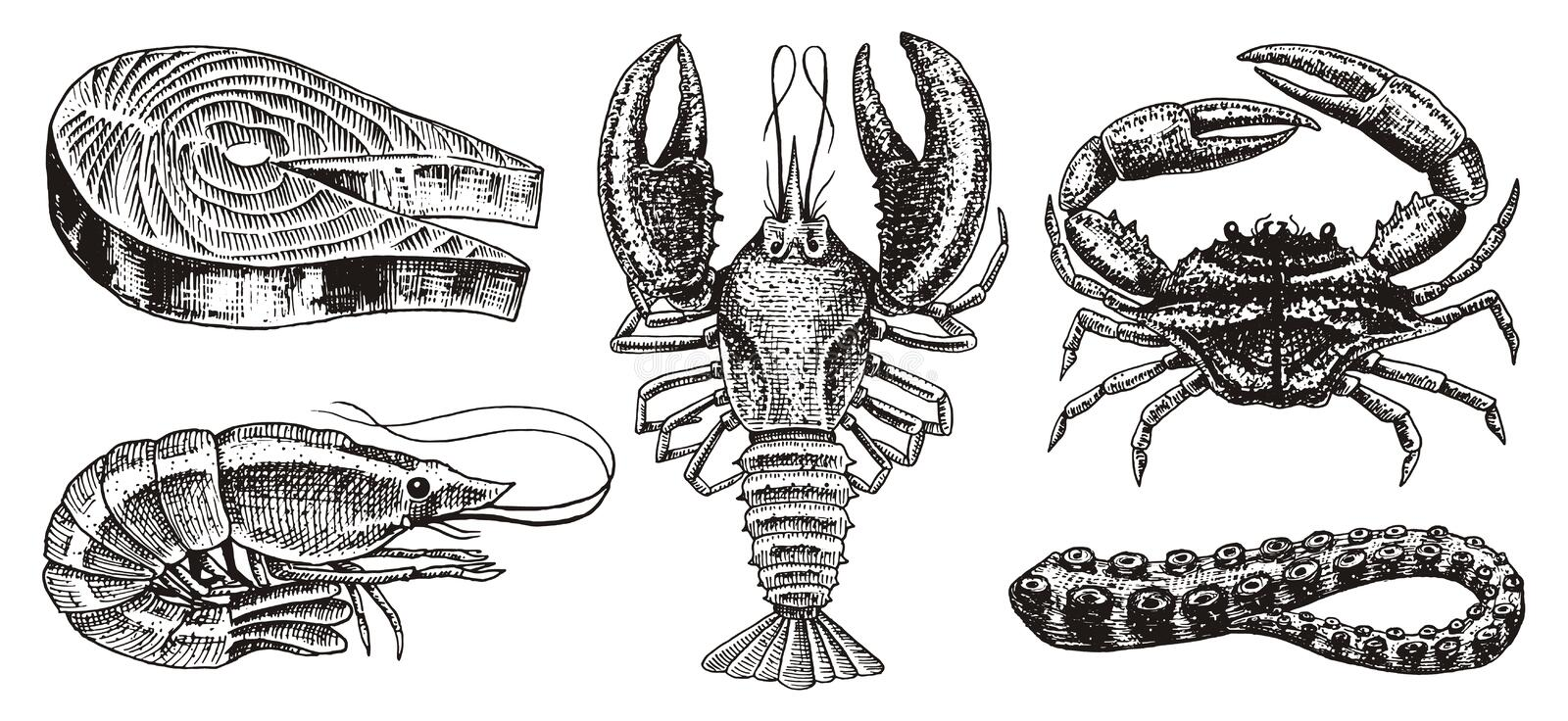 Crustaceans, shrimp, lobster or crayfish, salmon steak, crab with claws. River and lake or sea creatures. Freshwater royalty free illustration