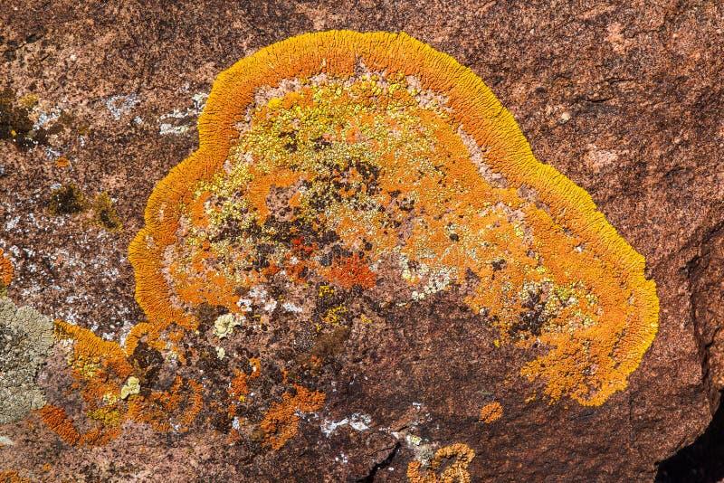 crustose лишайник стоковое фото rf