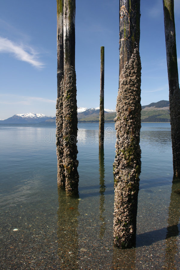 Download Crusty Pilings Royalty Free Stock Images - Image: 2324179