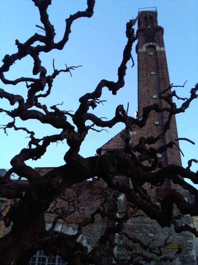 Cruz da vista a árvore fotografia de stock royalty free