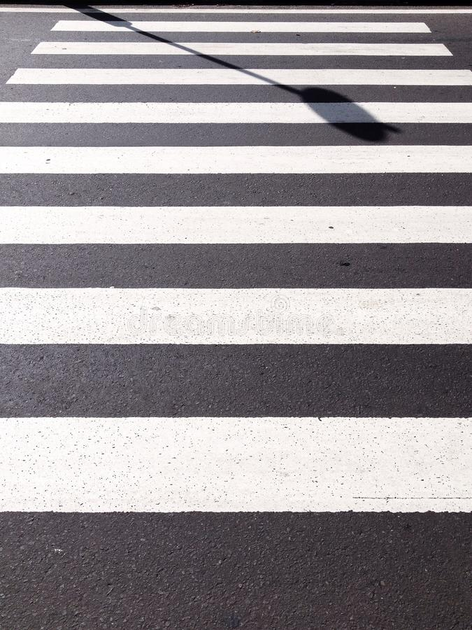 Cruz da zebra fotos de stock