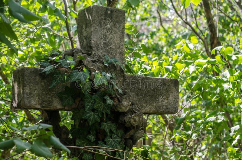 Cruz de piedra con la hiedra fotografía de archivo libre de regalías