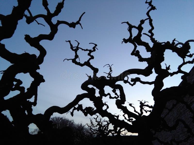Cruz do por do sol a árvore fotografia de stock royalty free