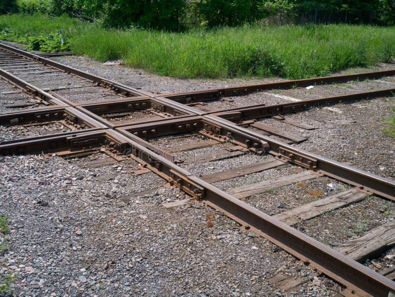 Cruzamento da rã da estrada de ferro. fotografia de stock