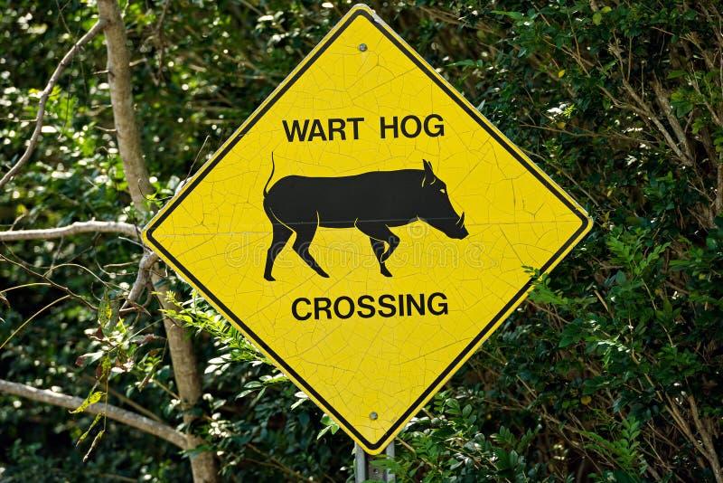 Cruzamento do porco da verruga do sinal de tráfego imagens de stock royalty free