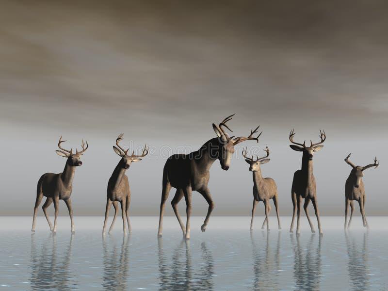 Cruzamento dos cervos ilustração do vetor