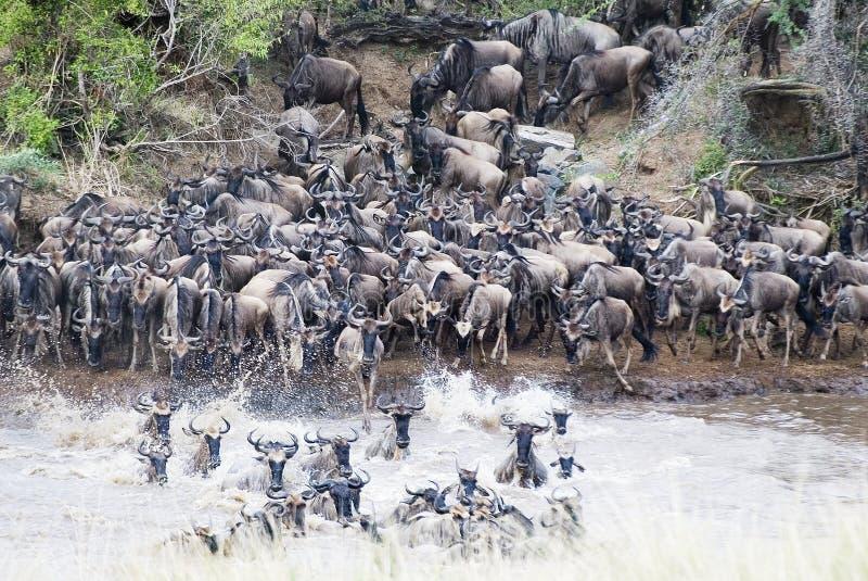 Cruzando o Mara fotos de stock royalty free