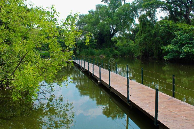 Cruzar el puente en una charca en el parque de Lumpini, Tailandia foto de archivo libre de regalías