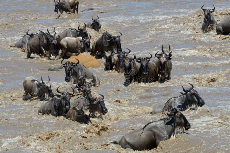 Cruzar el río de Mara imagen de archivo libre de regalías