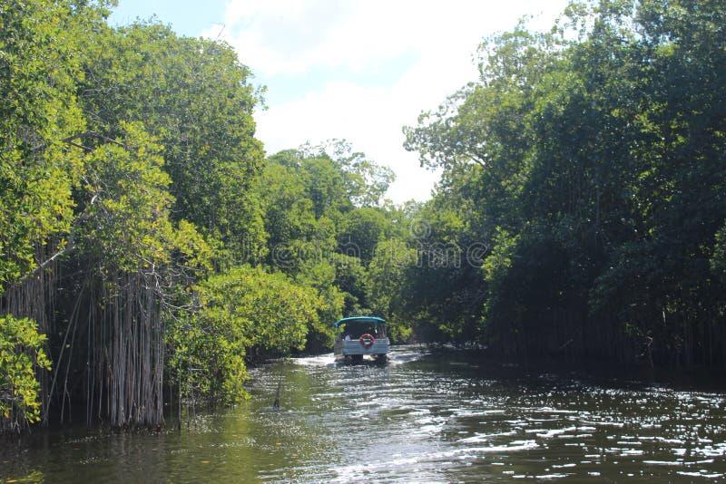 Cruzeiro preto do rio, Jamaica, Índias Ocidentais fotos de stock royalty free