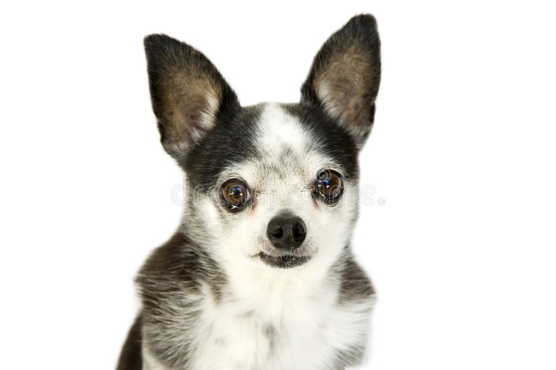 Crying dog stock photography