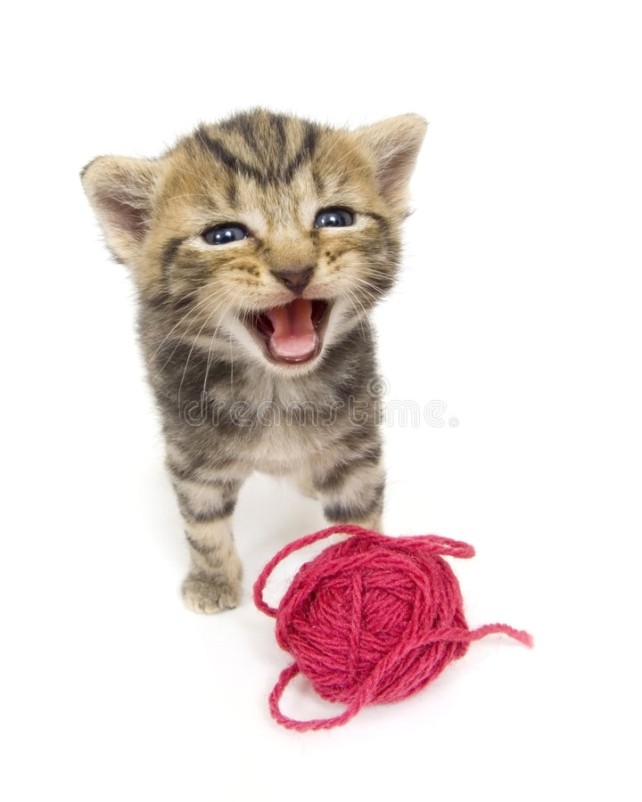 Download Crying Kitten On White Background Stock Photo - Image of string, farm: 842050