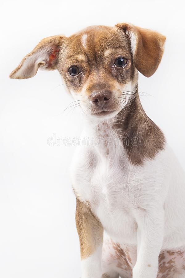 Crying Puppy stock images