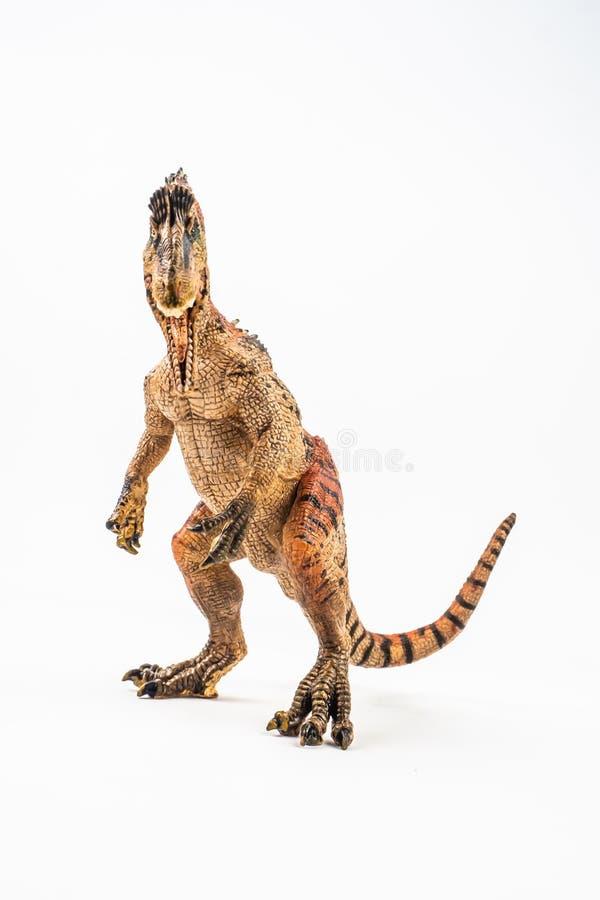Cryolophosaurus, δεινόσαυρος στο άσπρο υπόβαθρο στοκ φωτογραφίες