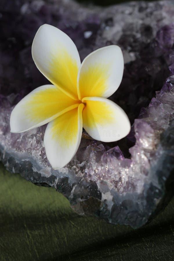 crystal ametystowy kwiatek plumeria zdjęcia stock