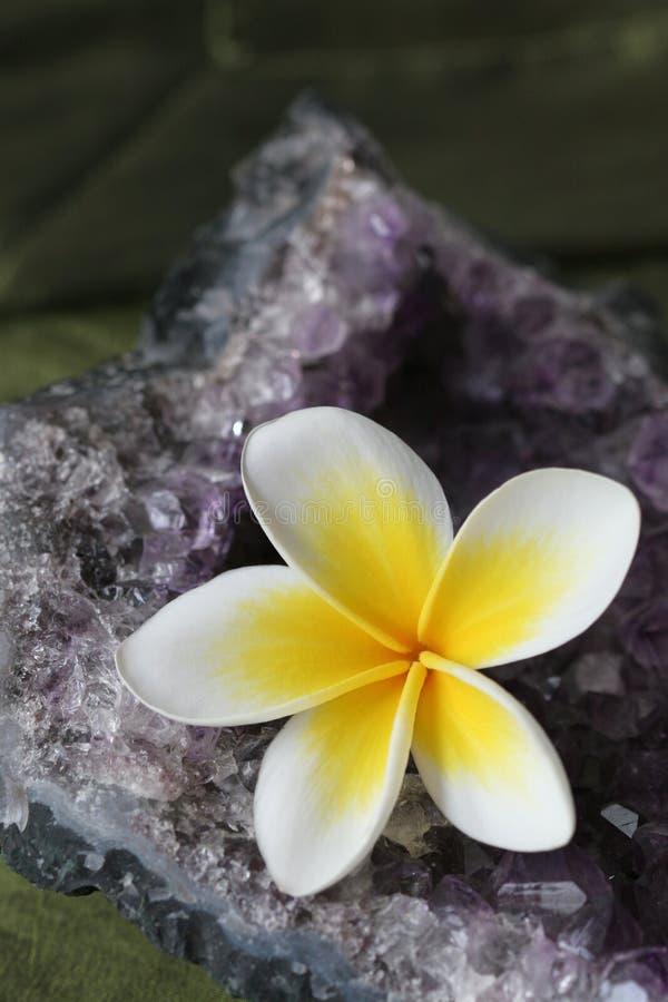 crystal ametystowy kwiatek plumeria obrazy stock