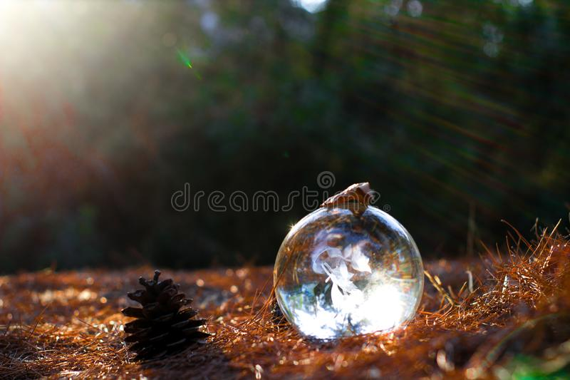 Crystal ball on the autumn ground and dead leafs. Crystal ball on the ground with dead leafs a pine and sun reflection on a autumn scenic noon royalty free stock photo