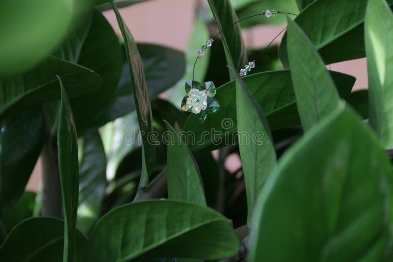 Crystal blomma fotografering för bildbyråer