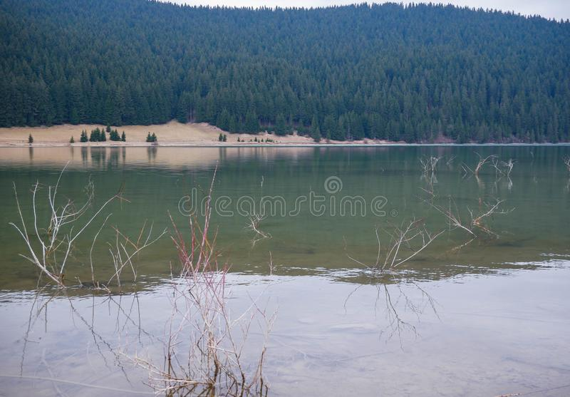 Crystal clean lake at springtime, pine forest. In the background stock photos