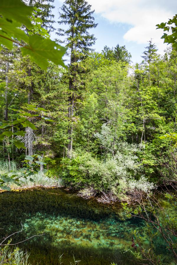 Crystal clear lake in the woods. Plitvice, National Park, Croatia.  stock photo