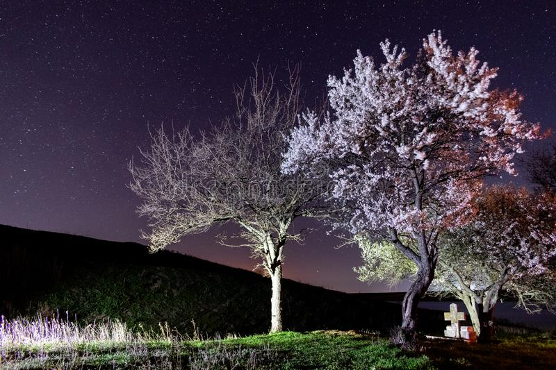 Crystal clear sky and stars over blooming trees. royalty free stock image