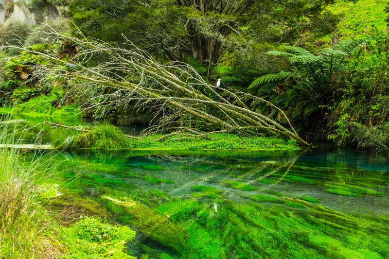 Crystal clear stream stock images