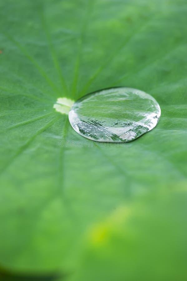 Crystal Clear Water Droplet auf Wasser Lily Leaf lizenzfreie stockfotografie