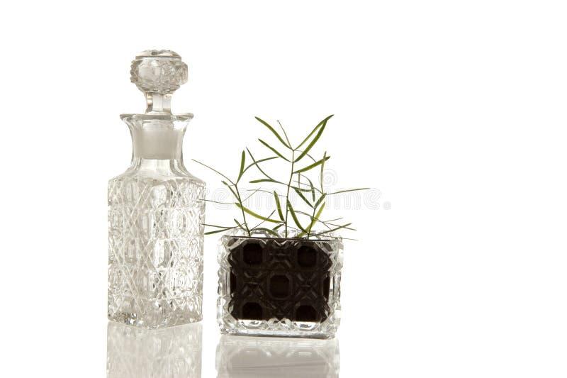 Crystal glasflaska och växt arkivbilder