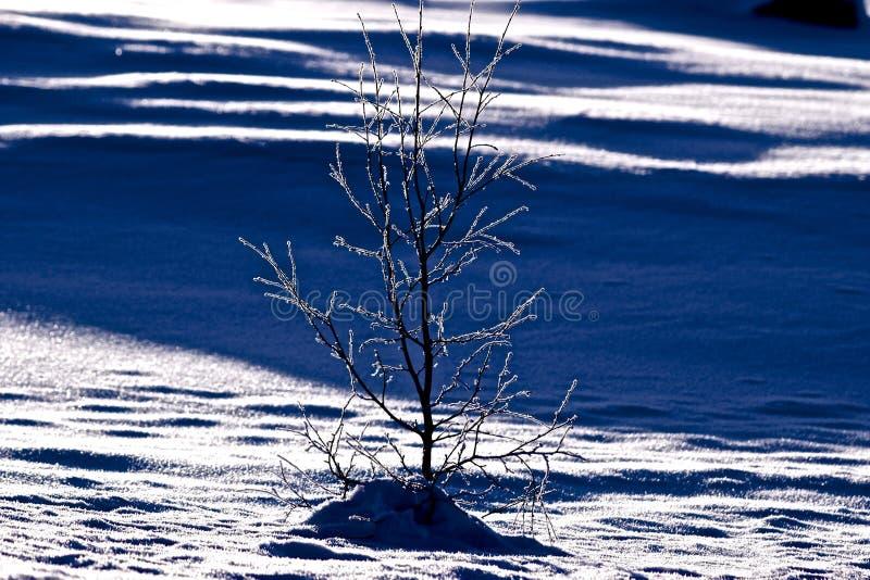 Crystal Snow photos libres de droits