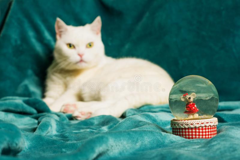 Crystal snowball. Cat lying on blanket in a blurry background. royalty free stock image