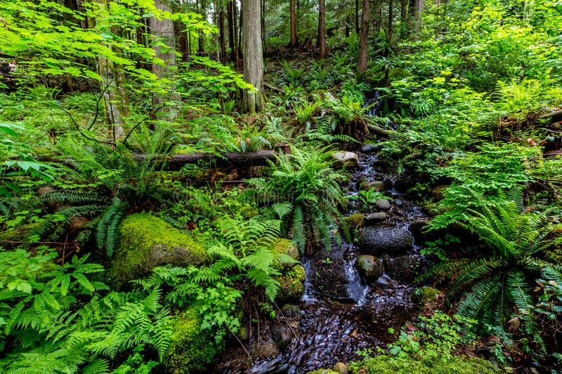 Crystal Stream Flowing Through une belle forêt tropicale primitive images stock