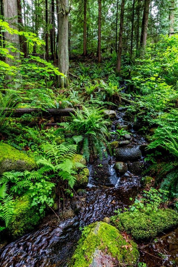 Crystal Stream Flowing Through une belle forêt tropicale primitive image libre de droits