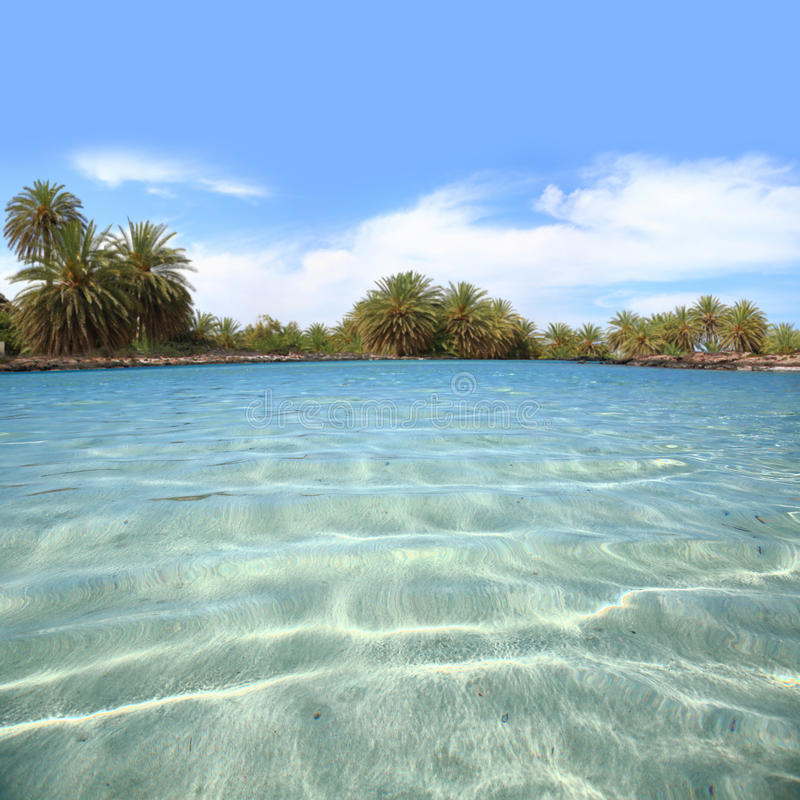 Crystal waters shore with palm trees. Crystal waters shore with palm tree forest royalty free stock image