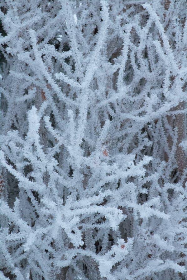 Crystalized djupfryst träd arkivfoto