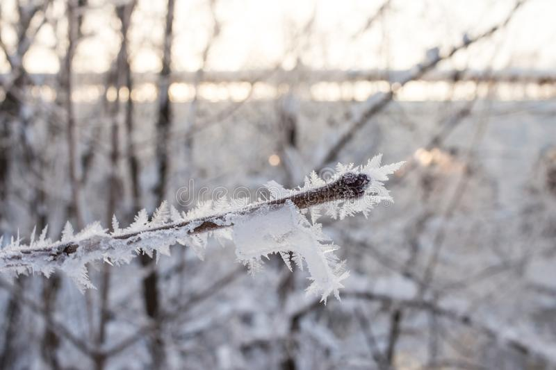 Crystallized fairy tree. hoarfrost on a branch of a tree i stock image