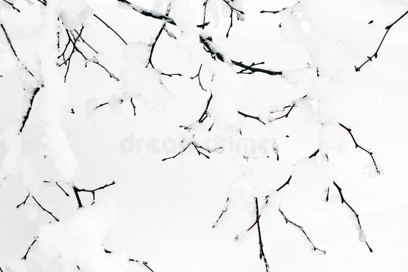 Crystallized fairy tree. Winter background. stock photos