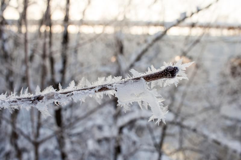 Crystallized fairy tree. Wintr background. stock photo